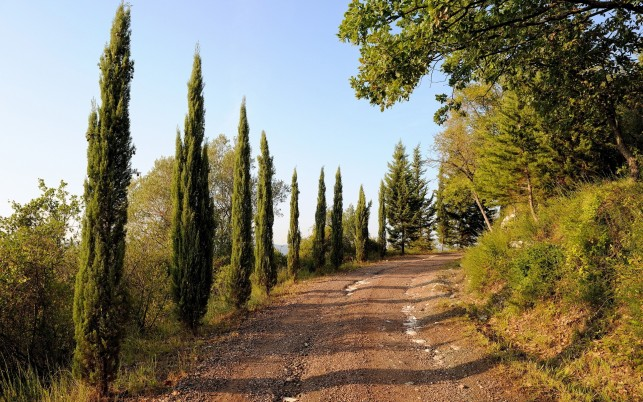 Beautiful Road & Trees Italy wallpapers and stock photos