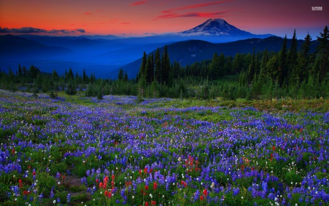 Blue Peaks Trees Flowers Dusk wallpapers and stock photos