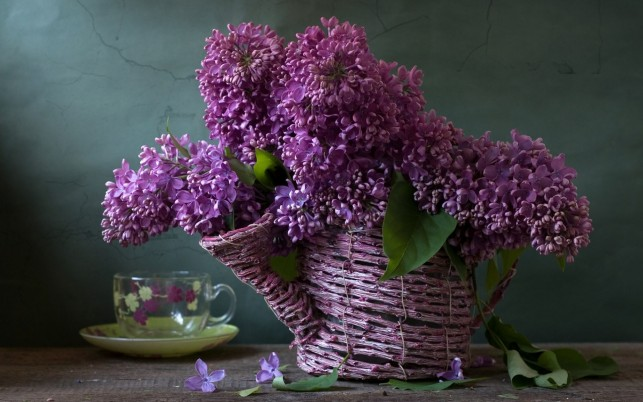 Lilac Shower wallpapers and stock photos
