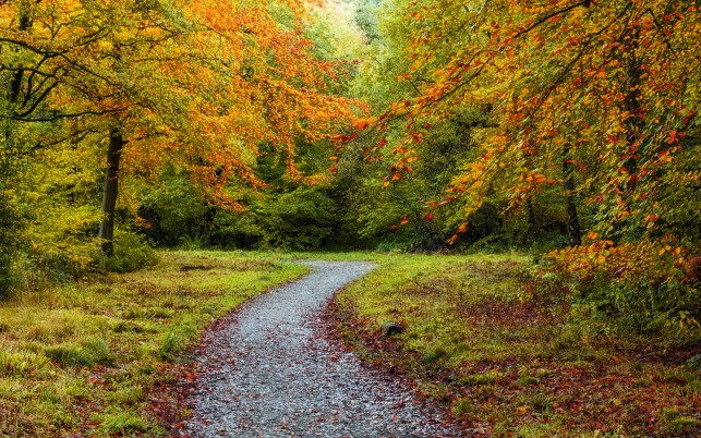Orange Trees & Gray Path wallpapers and stock photos