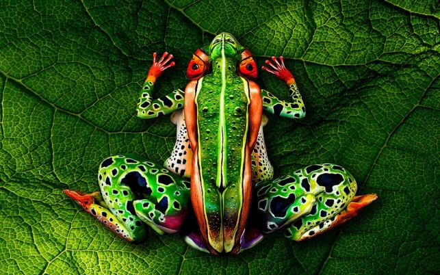 The Frog Body Painting wallpapers and stock photos