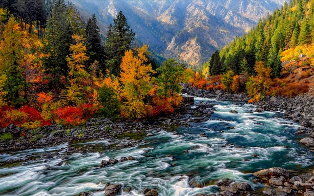Random: Colorful Forest & Rapid River