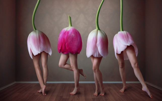 Sexy Tulips wallpapers and stock photos