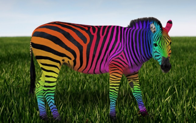 Rainbow Zebra wallpapers and stock photos