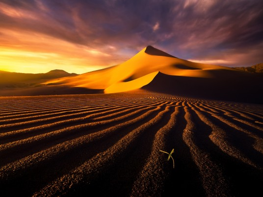 Random: Brown Desert Sprout Sunset
