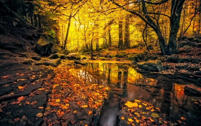 Golden Forest Creek Black Rock wallpapers and stock photos