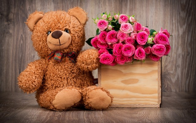 Cute Teddy & Pink Roses wallpapers and stock photos