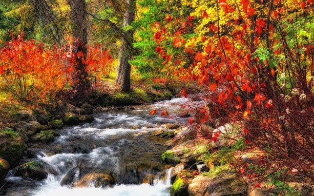 Autumn Bushes & Rushing Creek wallpapers and stock photos