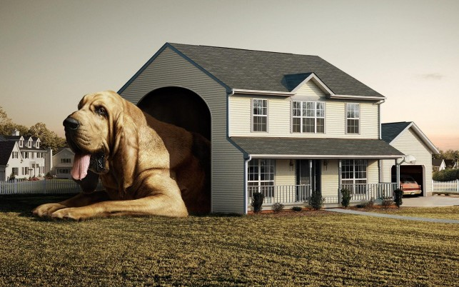 Dog House wallpapers and stock photos