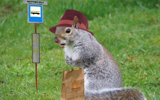 Squirrel Shopping Bag wallpapers and stock photos