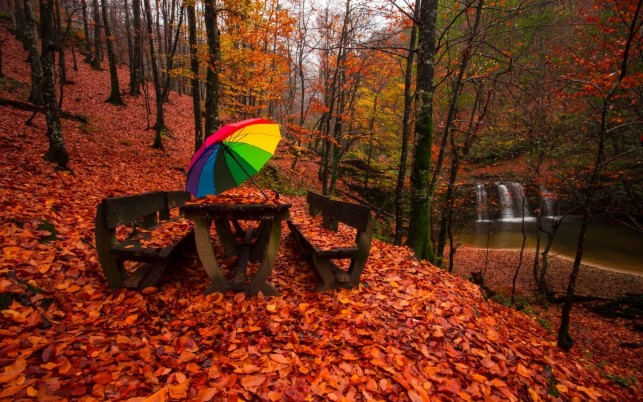 Wood Red Carpet Bench Umbrella wallpapers and stock photos
