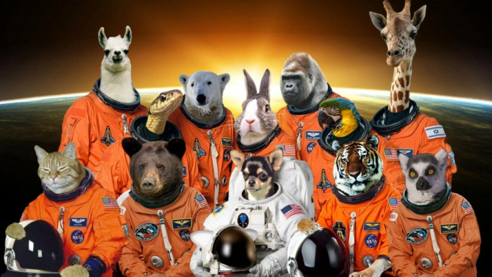 Space Animals wallpapers and stock photos