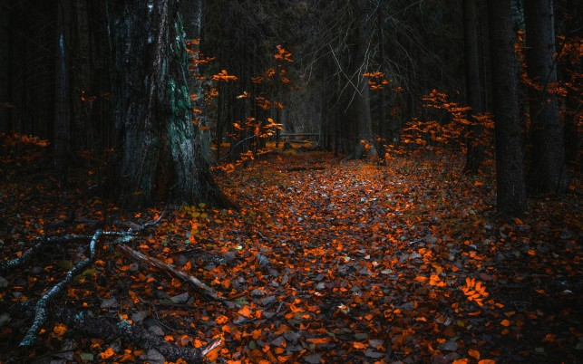 Black Forest & Orange Leaves wallpapers and stock photos