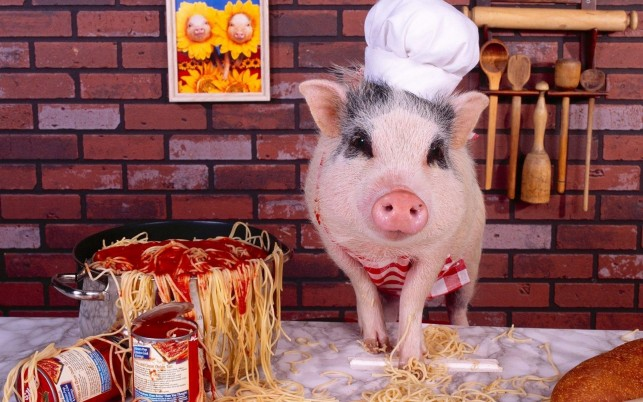 Chef Piggy wallpapers and stock photos