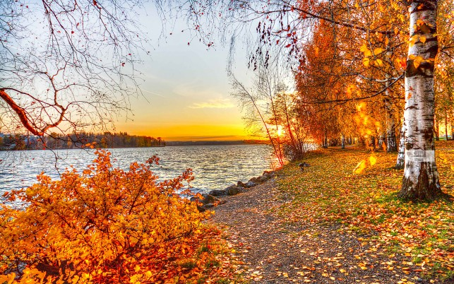 Golden Birch Trees Lake Shore wallpapers and stock photos