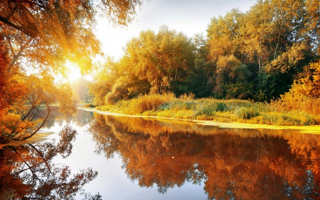 Autumn Trees Lake Bright Sun wallpapers and stock photos
