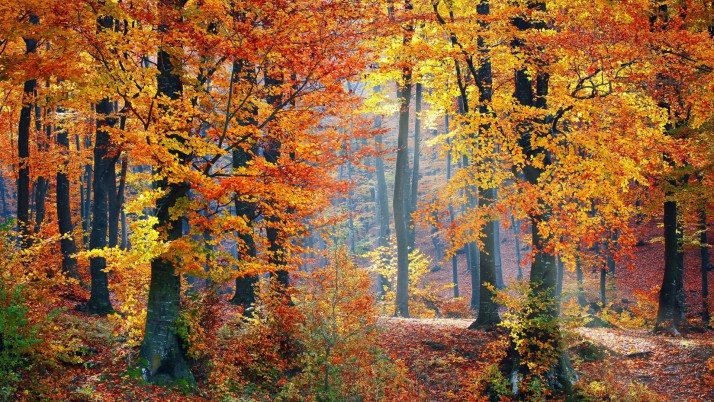 Beautiful Autumn Wood Sunlight wallpapers and stock photos