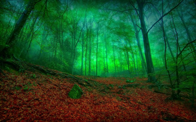 Glowing Green Wood Red Foliage wallpapers and stock photos