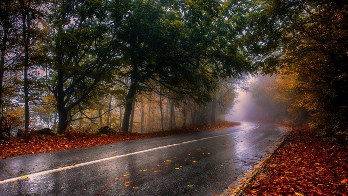 Wood Rainy Road Foliage Foggy wallpapers and stock photos