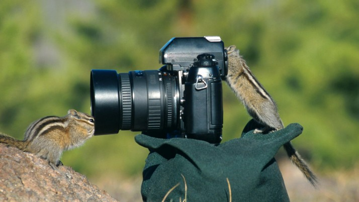 Ground Squirrels Camera wallpapers and stock photos