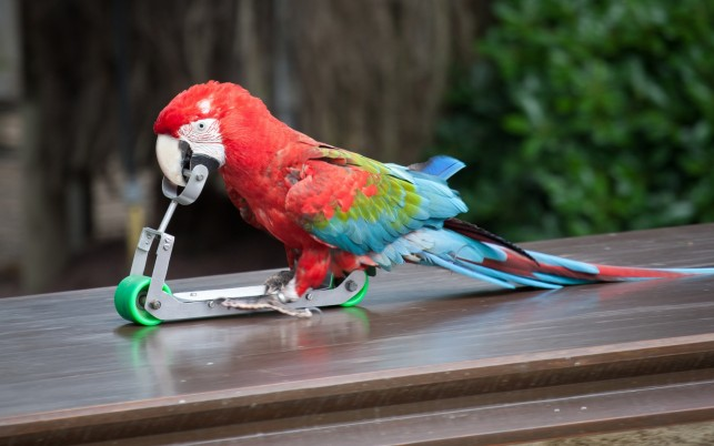 Parrot Scooter wallpapers and stock photos