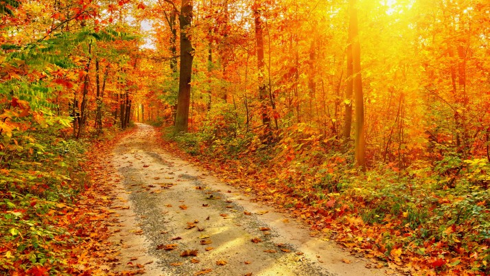 Camino de bosque del otoño Sun Vigas wallpapers and stock photos