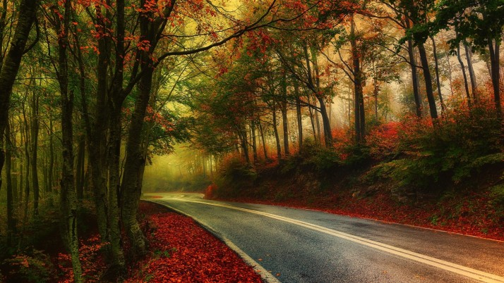 Random: Autumn Wood Road Leaves Foggy