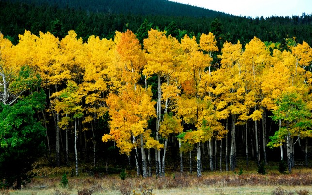 Luminous Yellow & Green Trees wallpapers and stock photos