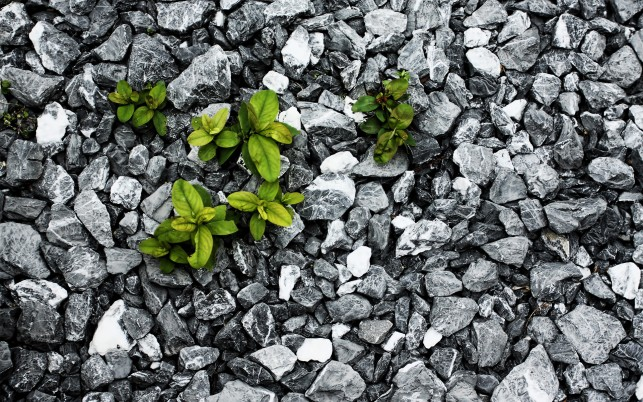 Green Plants & Gray Stones wallpapers and stock photos