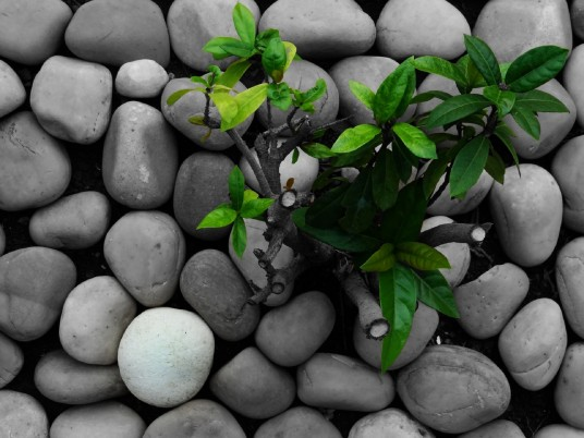Grass Green Plant Gray Stones wallpapers and stock photos