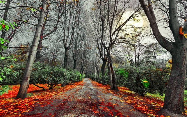 Bare Trees Road Orange Foliage wallpapers and stock photos