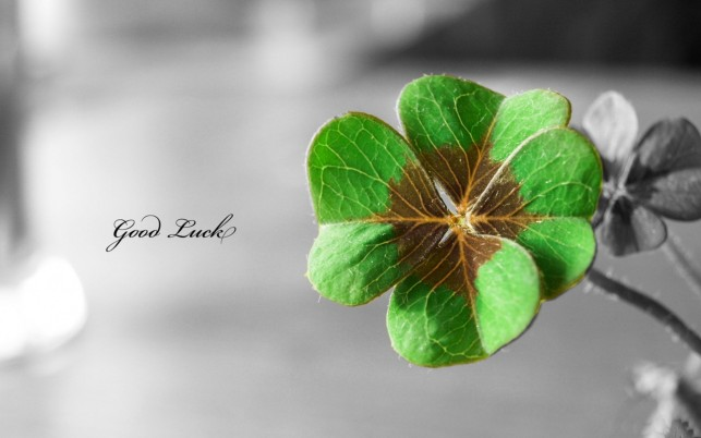 Good Luck Clover wallpapers and stock photos