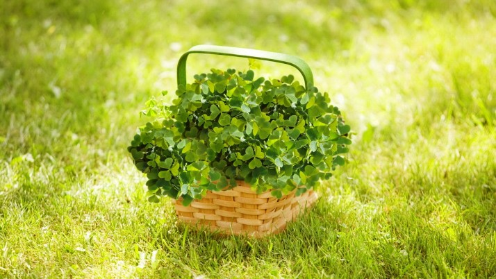 Basket With Clover wallpapers and stock photos