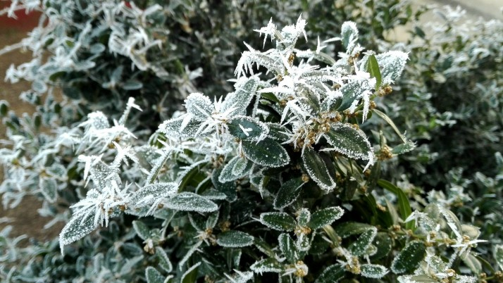 Winter plant wallpapers and stock photos