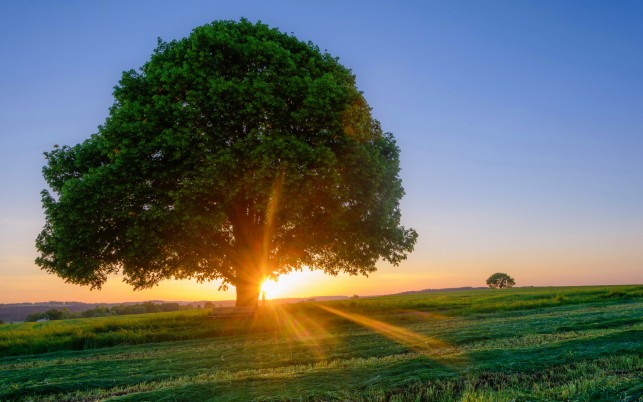 Big Tree Bench Field Sunrise wallpapers and stock photos