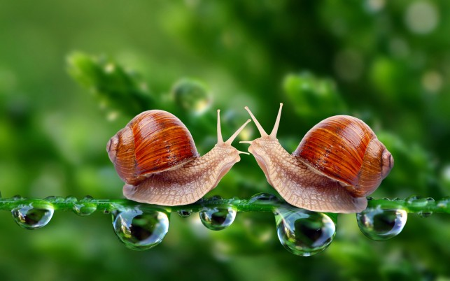 Snails Couple Culm Dew Drop wallpapers and stock photos