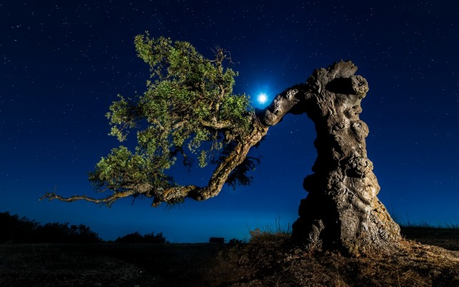 Twisted Tree Starry Night wallpapers and stock photos