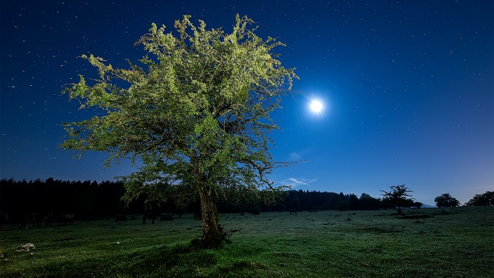 Tree Meadow Stars Full Moon wallpapers and stock photos
