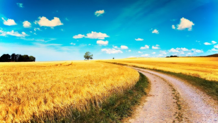 Yellow Wheat Fields Road Sky wallpapers and stock photos