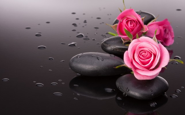 Pink Roses & Black Pebbles wallpapers and stock photos