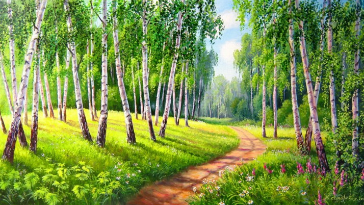 Birch Trees Way Meadow Sunny wallpapers and stock photos