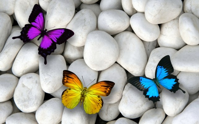 Purple Yellow & Blue Butterfly wallpapers and stock photos