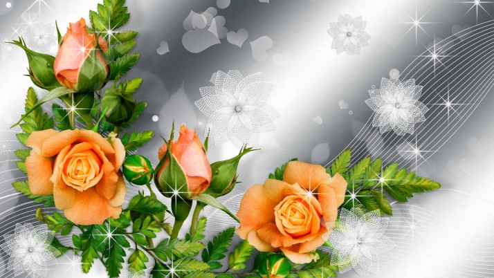 Orange Roses & Silver Blossoms wallpapers and stock photos