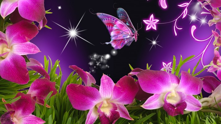Pink Orchids & Butterfly wallpapers and stock photos