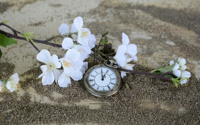 Pocket Watch wallpapers and stock photos
