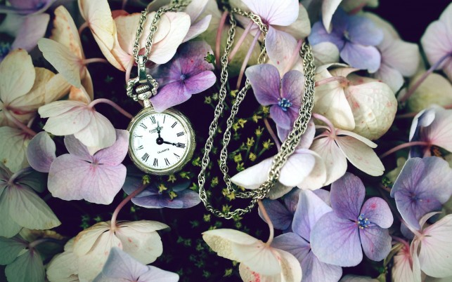 Pocket Watch & Blumen wallpapers and stock photos
