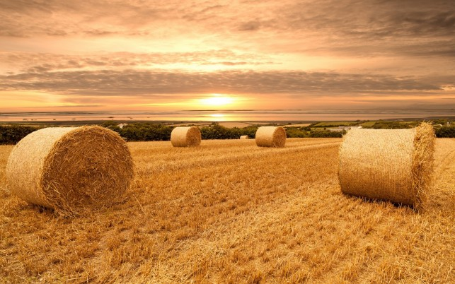 Field Hay Bales Pink Sunset wallpapers and stock photos