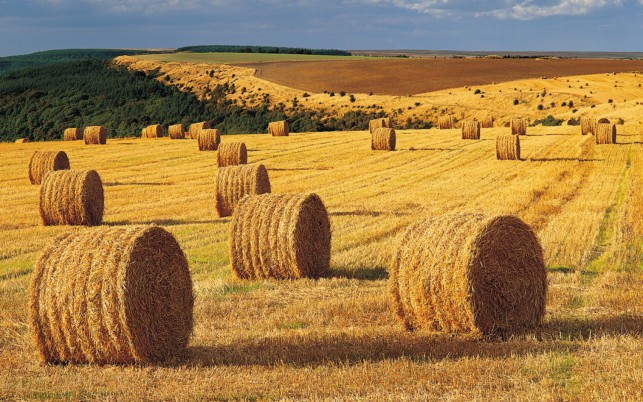 Harvest Field Hay Bales Forest wallpapers and stock photos