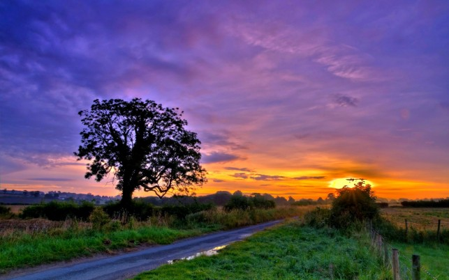 Fields Trees Road Fence Sunset wallpapers and stock photos