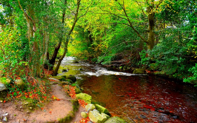 Bright Green Trees & Red Creek wallpapers and stock photos